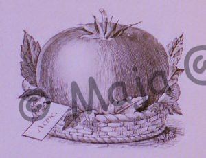 Darstellung der verschollenen Tomate Livingston's Acme