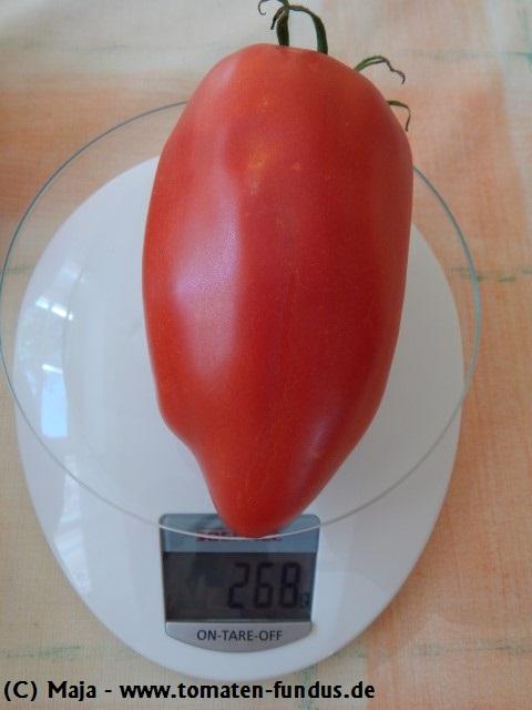 Rote Flaschentomate Howard Deutsche Tomate