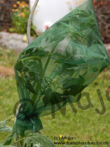 Sortenreines Saatgut anbauen mit Traubenschutzbeuteln aus Organza