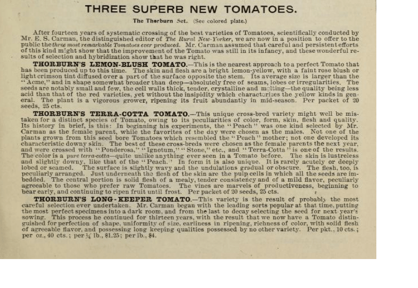 Beschreibung Thorburn Lemon Blush